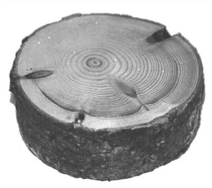 wooden-puckcircles-NB