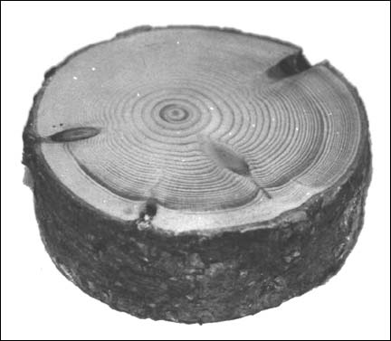 Early style Wooden Puck